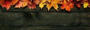 mobile-fall-background