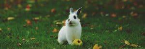 background bunny